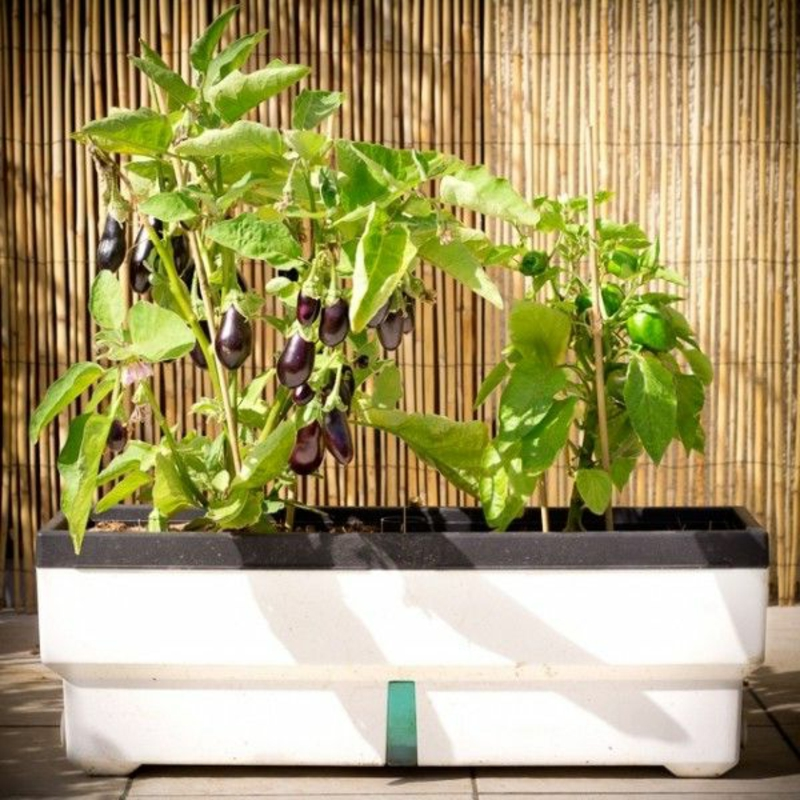 balkon-bepflanzen-blumentopf-grüne-pflanzen