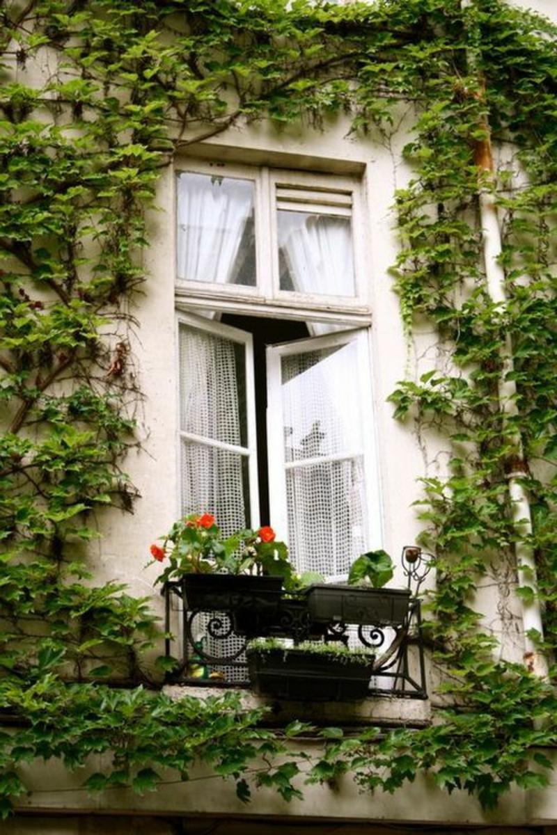 balkon-bepflanzen-ein-großes-fenster