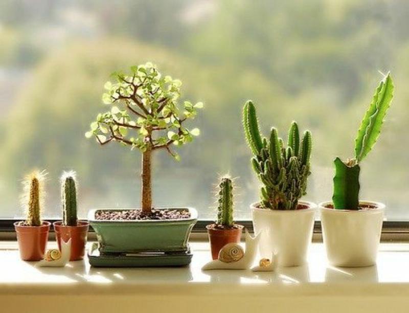 balkon-bepflanzen-kakteen-in-schönen-töpfen