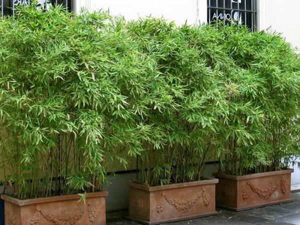 bambus-balkon-wunderschöne-pflanzen-in-töpfen