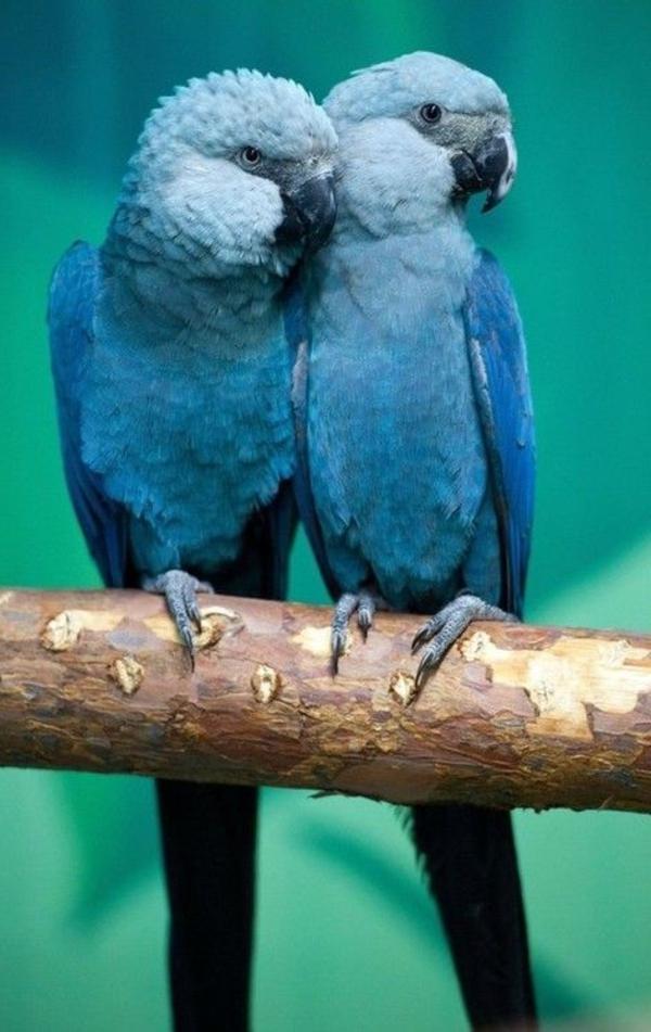 --blauer-papagei-papagei-bilder-papagei-bilder-papagei