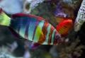 50 wunderschöne Fische – Bilder zum Erstaunen