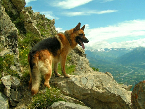 deutscher-Schäferhund-Gebirge