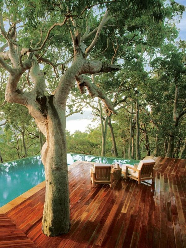 exotisches-Haus-Schwimmbad-Baum