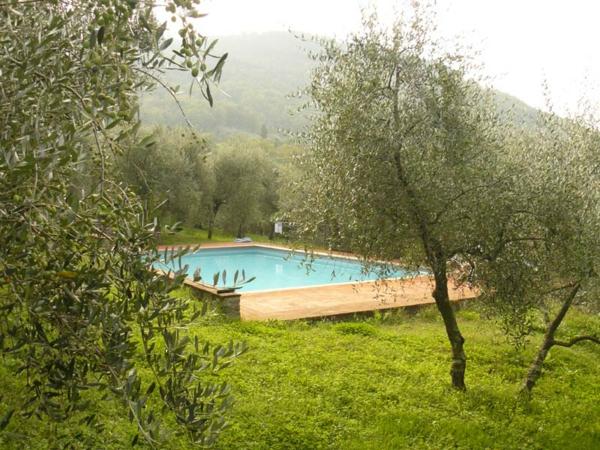 ferienhaus-in-toskana-mit-pool-grünes-gras