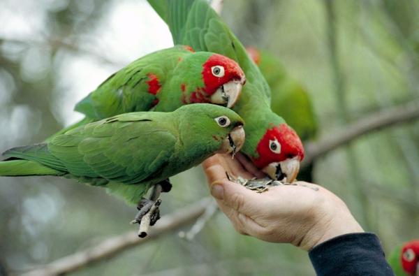 grüner-papagei-bunter-papagei-papagei-bilder-