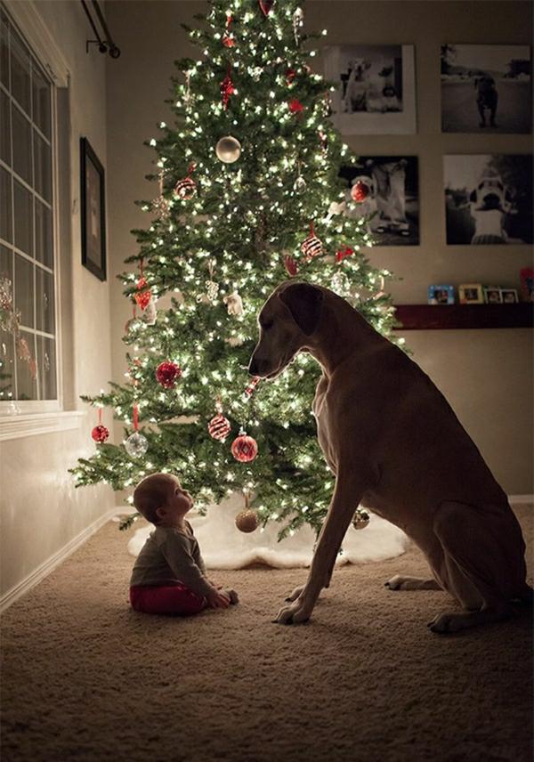 Hunde-Rassen-großer-Hund-Baby-Tannenbaum