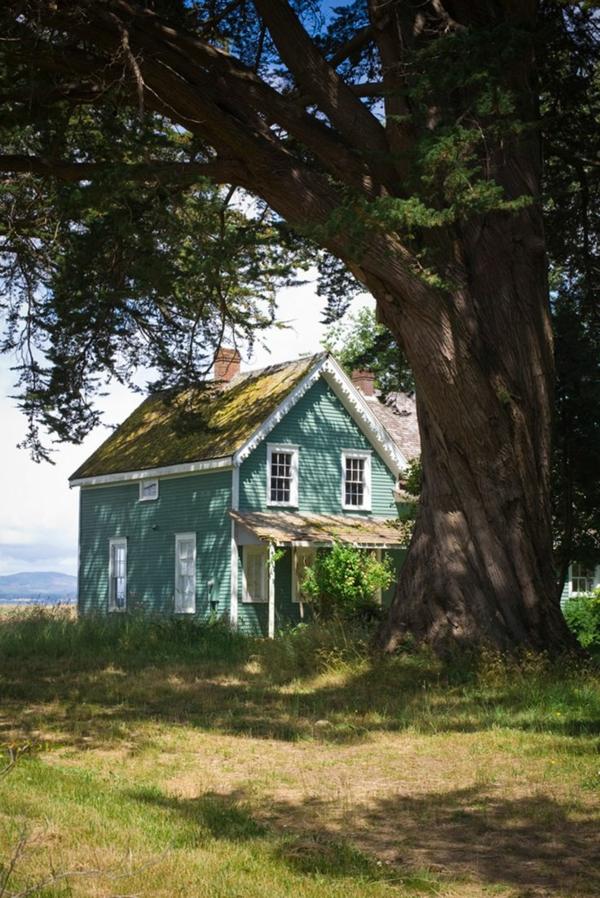 kleines-grünes-Haus