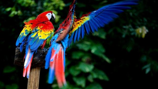ara papagei - unikale fotografien der bunten vögel