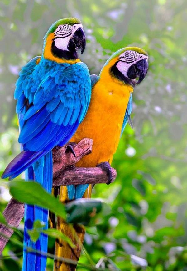 ara papagei unikale fotografien der bunten voegel