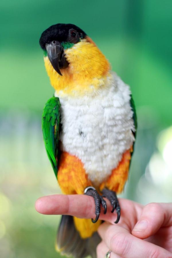 papagei-papagei-kaufen-papagei-kaufen-papagei-bilder-bunter-papagei--