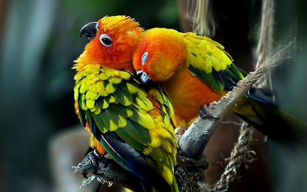 -papagei-papagei-kaufen-papagei-kaufen-papagei-bilder-bunter-papagei--