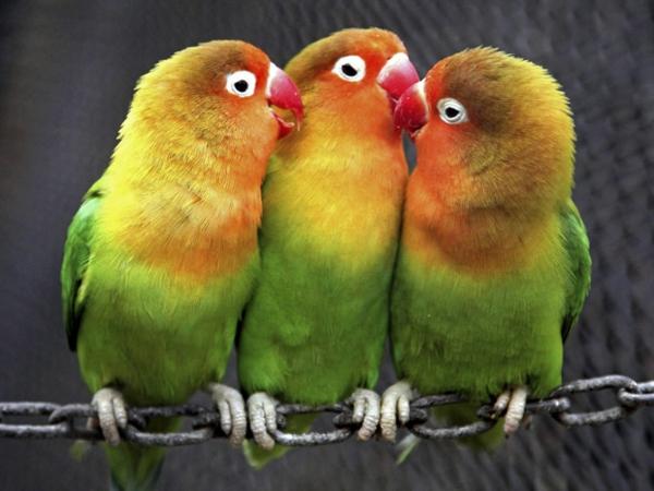 --papagei-papagei-kaufen-papagei-kaufen-papagei-bilder-bunter-papagei--