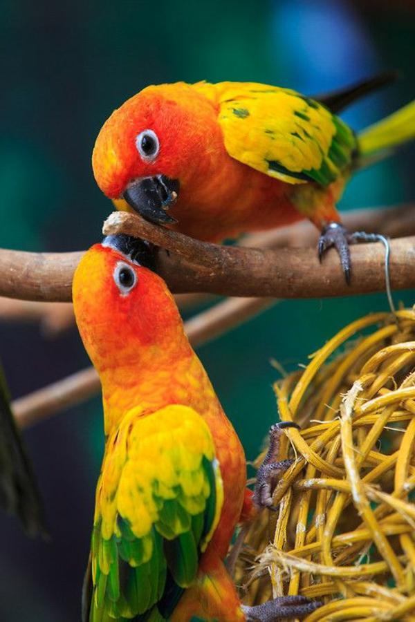 papagei-papagei-kaufen-papagei-kaufen-papagei-bilder-bunter-papagei