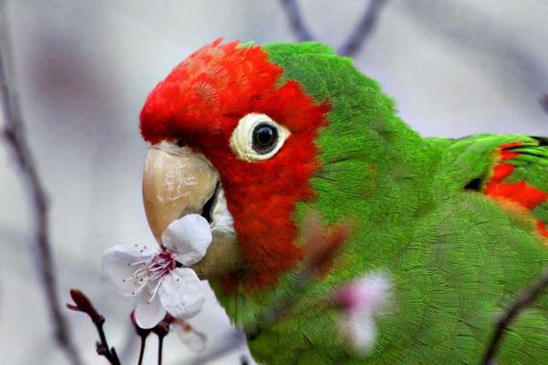 papagei-papagei-kaufen-papagei-kaufen-papagei-bilder--bunter-papagei