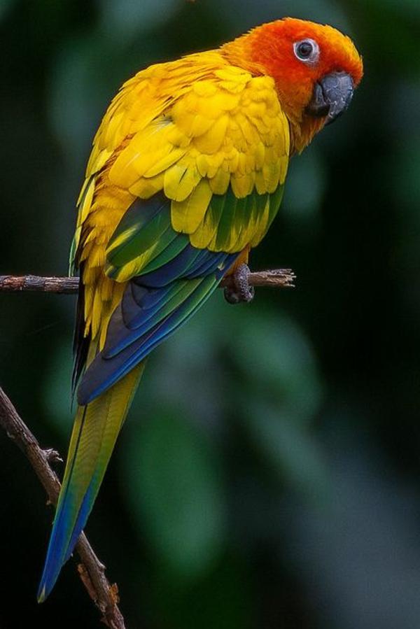 papagei-papagei-kaufen-papagei-kaufen--papagei-bilder-bunter-papagei