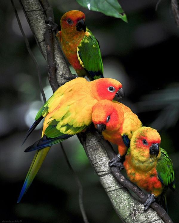 papageien - 50 unikale fotos zum inspirieren!