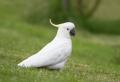 Papageien – 50 unikale Fotos zum Inspirieren!