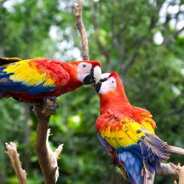 Papageien - 50 unikale Fotos zum Inspirieren! - Archzine.net