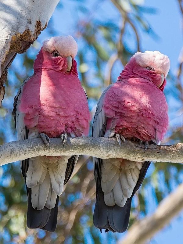 papageien - 50 unikale fotos zum inspirieren! - archzine