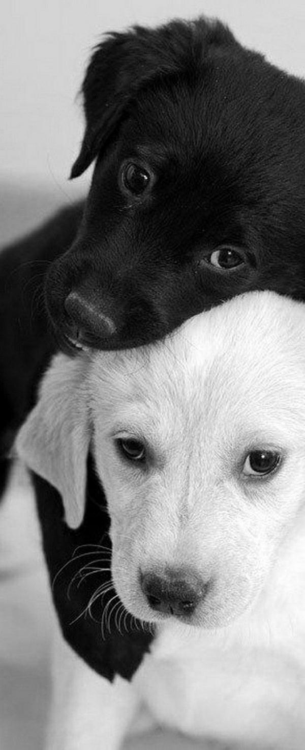 süße-Welpen-schwarz-weiß