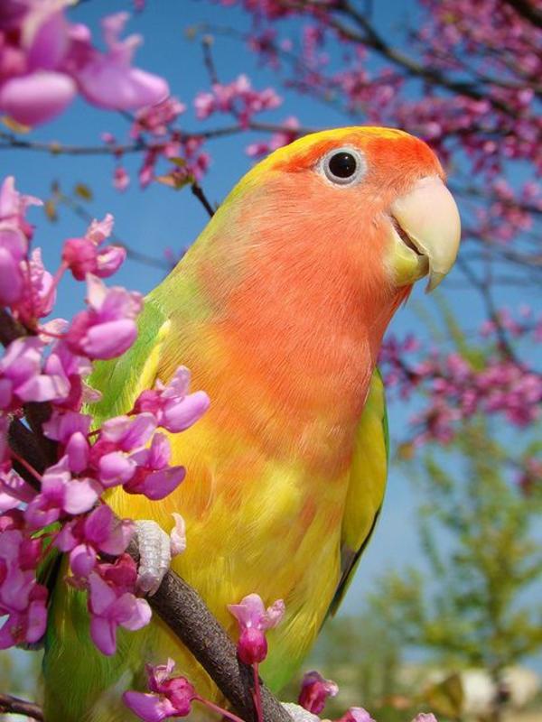 schöner-papagei-bunter-papagei-papagei-bilder-papagei-bilder