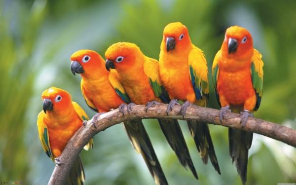 -schöner-papagei-bunter-papagei-papagei-bilder-papagei-bilder