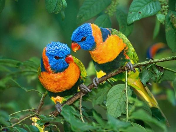 schöner-papagei-papagei-kaufen-papagei-kaufen-papagei-bilder-bunter-papagei