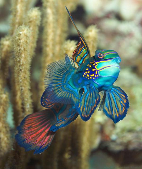 50 wundersch ne fische bilder zum erstaunen for Fische halten