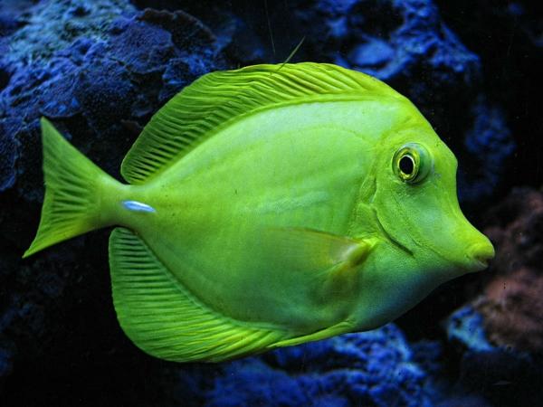 50 wundersch ne fische bilder zum erstaunen for Fisch bilder