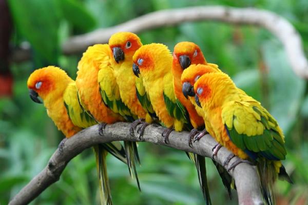 Papageien 50 Unikale Fotos Zum Inspirieren