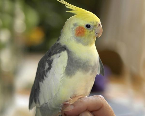 toller-papagei-bunter-papagei-papagei-bilder-papagei-bilder---