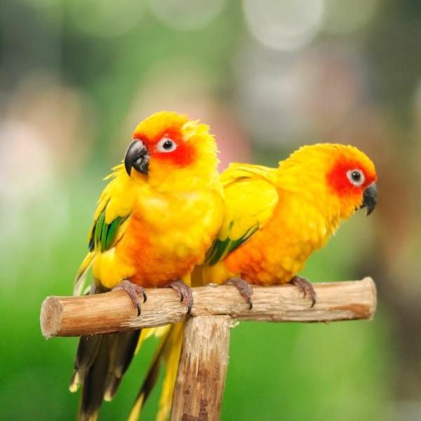 tolle-vögel-bunter-papagei-papagei-bilder-papagei-bilder-gelbe-papagei