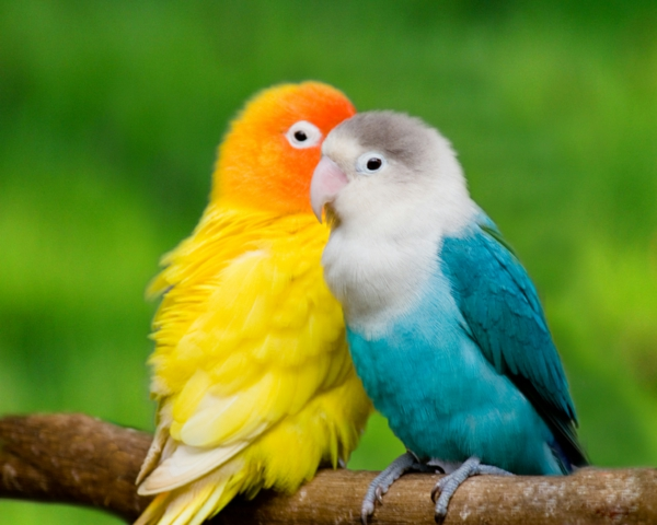 toller-papagei-bunter-papagei-papagei-bilder-papagei-bilder-papagei ...
