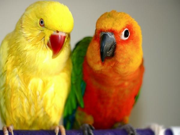 --tolle-vögel-bunter-papagei-papagei-bilder-papagei-bilder
