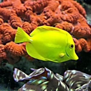 50 wunderschöne Fische - Bilder zum Erstaunen