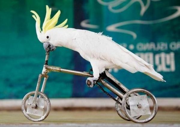weißer-kakadu-papagei-papagei-bilder
