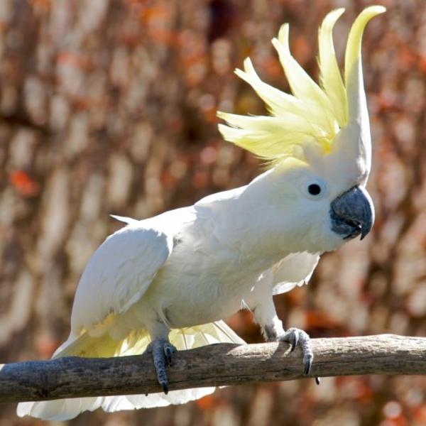 weißer-papagei-kakadu-in-weiß-
