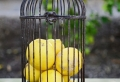 21 originelle Ideen für Zitronen Deko!