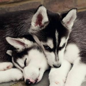 Liebevolle Hunde Rassen - 38 rührendе Bilder
