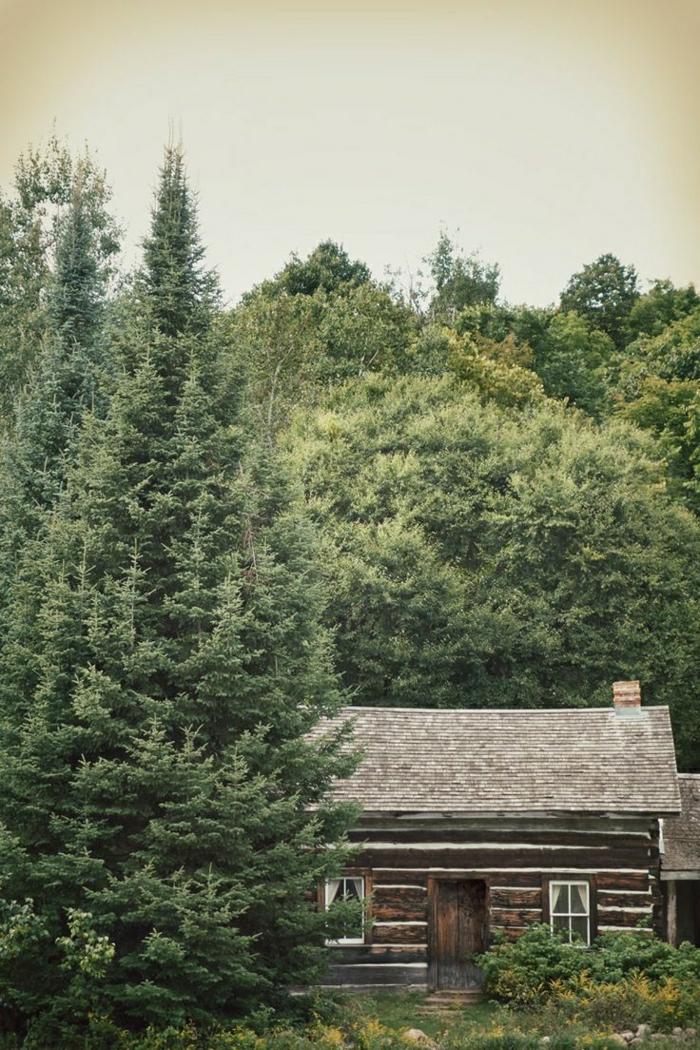 Blockhaus-Hütte-Gebirge-Wald-gemütlich