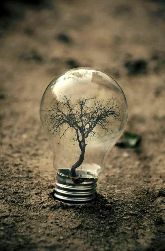 coole-Bilder-Glühbirne-Baum-Erde
