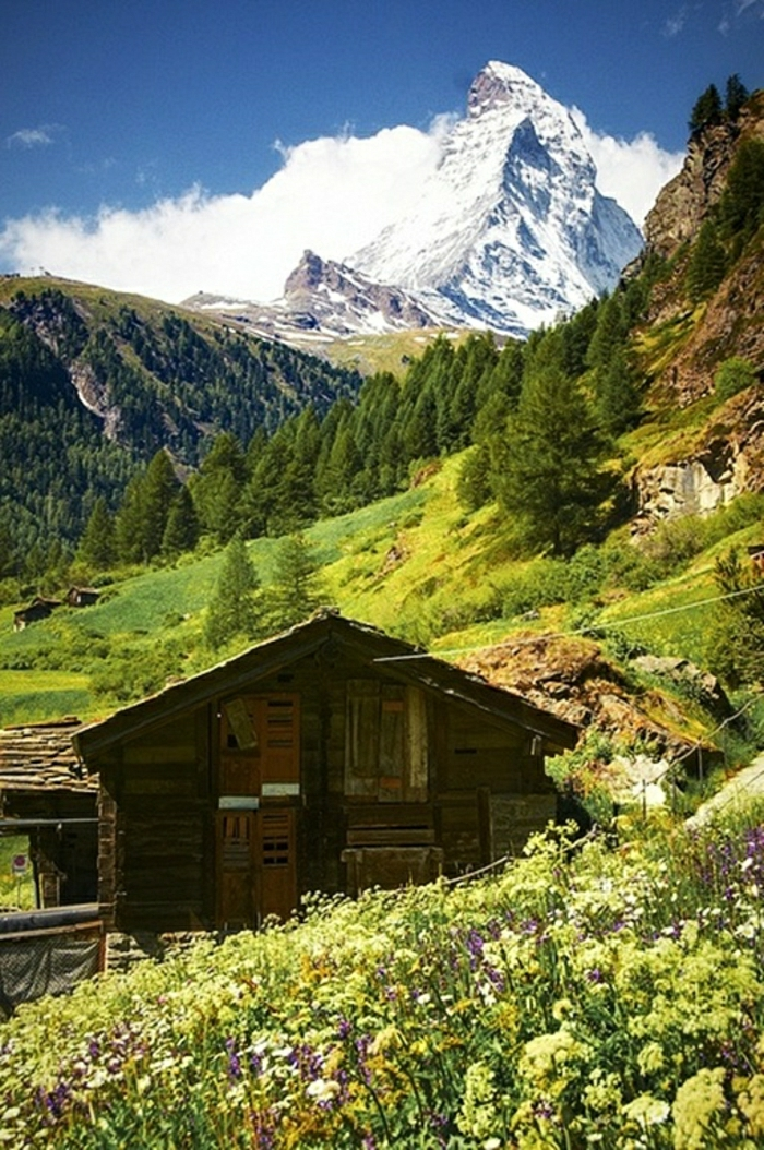 Hütte-Holz-altmodisch-Gebirge-Schnee-Wiese-Blumen