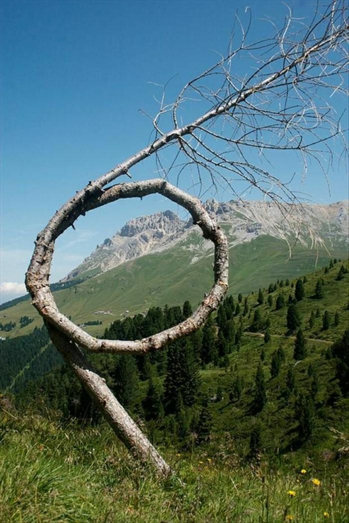 Wiese-geschleifter-Baum-Natur