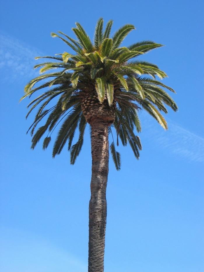 bilder-von-palmen-blauer-himmel-als-hintergrund