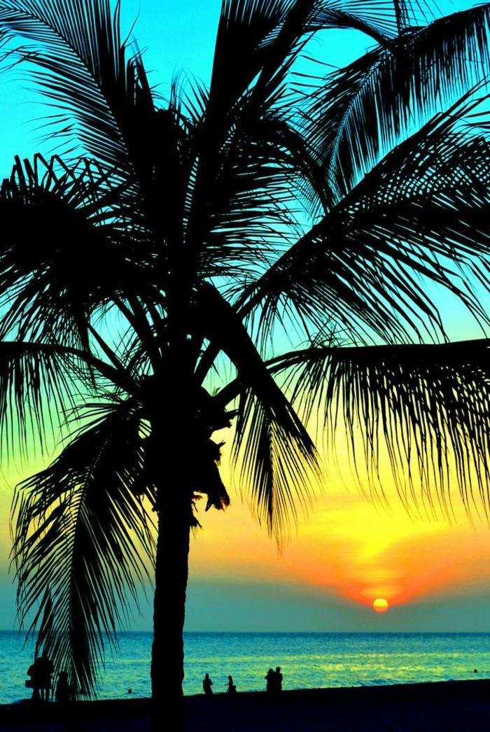 42 richtig einzigartige bilder von palmen
