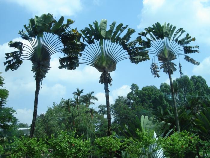 bilder-von-palmen-drei-kreative-modelle