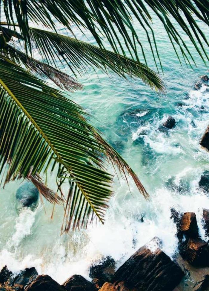 bilder-von-palmen-foto-von-oben-genommen