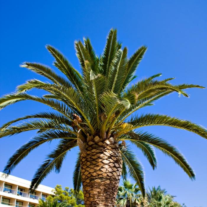 bilder-von-palmen-großartig-aussehen