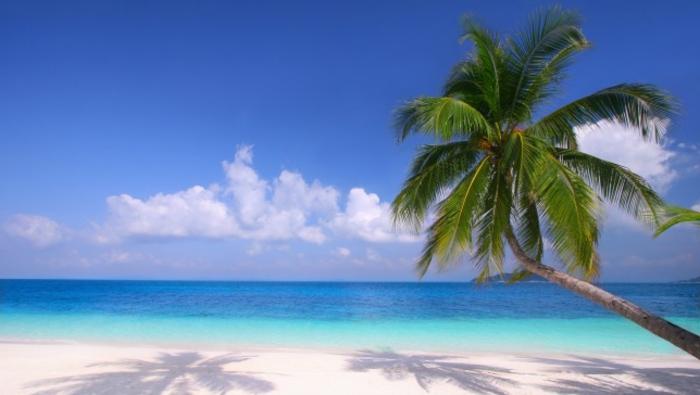 bilder-von-palmen-sand-und-wasser